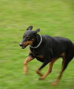 dog_attack_montgomery_county